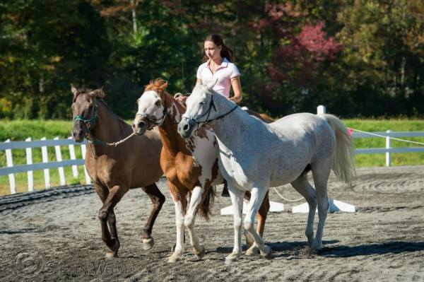 Monarch, Skye and Lady at a demo in PA